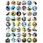 Birds Stickers 3/4