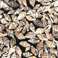 Genuine Mini Seashells - 2800 Pieces